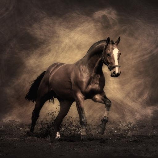 Horse Breeds Expert